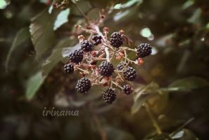 Blackberry by irinama