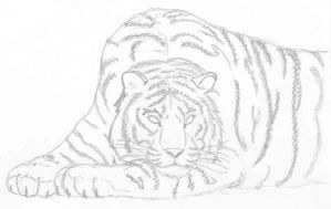 Tiger by Thailog
