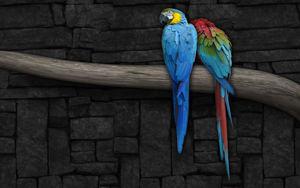 Colorful Parrots by artbhatta
