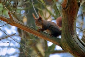 Squirrel Quest II by OliverBPhotography