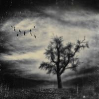 Sinister Landscapes - The Fields by bliXX-a
