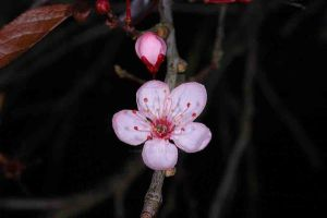 Blossom Flower by oliverporter3