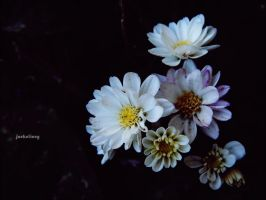 flowe rs by jackelive