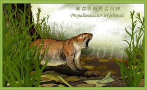 Propalaeocastor irtyshensis by sinammonite