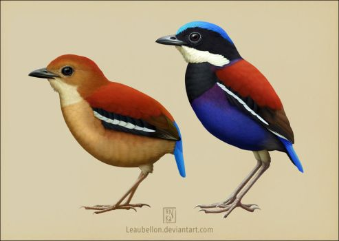 Blue-headed Pitta by Leaubellon