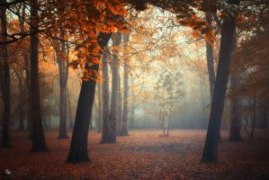 Childhood by ildiko-neer