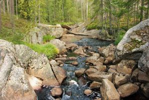 Primeval forest creek by duncan-blues