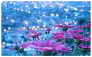 Flower bokeh v.2 by zentenophotography