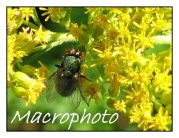 Macrophoto devID by picworth1000wrds