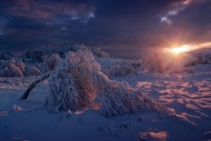Winter sun by satorifoto