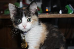 Chell the Calico by icantthinkofaname-09