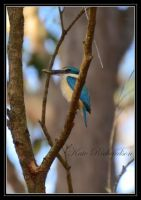 Sacred King Fisher by DesignKReations