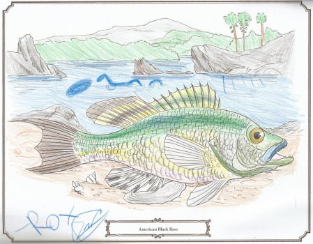 fish coloring book - american black bass by Marsharino