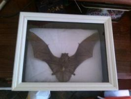 Real Shadowbox Bat by LivingBiohazards