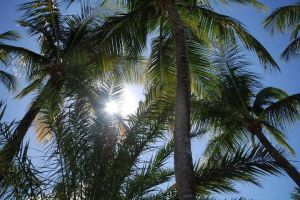 Palm trees by strueberry