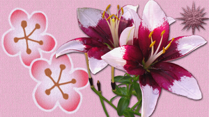 Asiatic Lily Duo Wallpaper by Fubelle