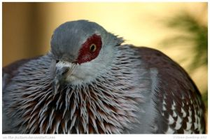 Speckled Pigeon by In-the-picture