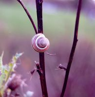 Snail Condo by ELaiNes-DarkRoom