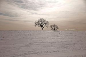 Winter Wasteland by jsalv