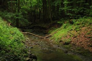 Deep Forest Creek by HoremWeb