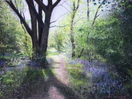 Bluebell Wood ,Southwick by DIXIEDEAN