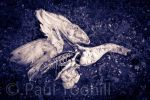 Death of a Swan by CoreSect