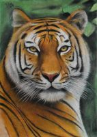 Tiger - the heart of India by Vishvesh99