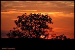 Setting with tree.... by NotablePhotography