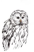 Tawny owl by Ainaven