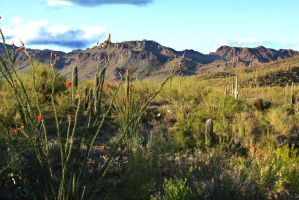 Sonoran Desert 1330 by mammothhunter