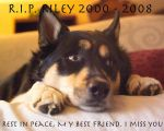 Riley... a memorial of sorts by alphamalezulu4