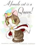 A female cat is a Queen by keevs