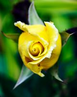 A Kiss Of Yellow by AngelaLeonetti