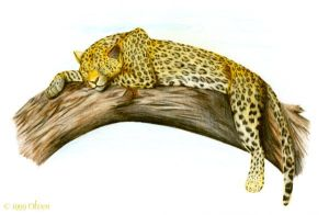 Sleeping leopard by theOlven