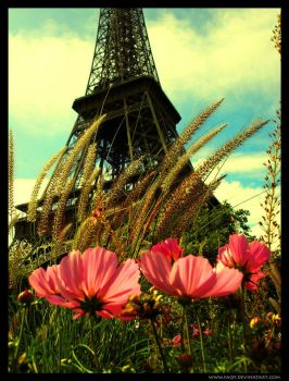 Paris: Eiffel Tower .. by faQy