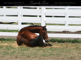 quarter horse stock 7 by tragedyseen