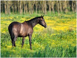 In The Perfect Pasture I by KonikPolski