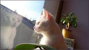 My Cat - McKay..:: by Lillka