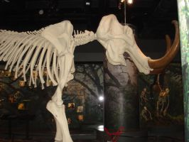 mammoth skeleton by Flyg-stock