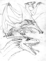 Dragons by Israel-C