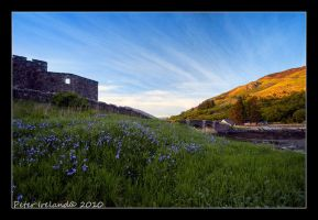 Bluebells at Eilean Donan by Pistolpete2007