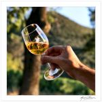 Wine and life... by Michel-Lag-Chavarria