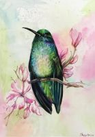 Hummingbird by Ungalianta