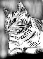 Zizi sketch by sequential
