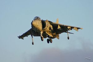 Harrier by Atmosphotography
