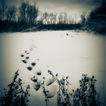 crossing unmarked snow by equivoque