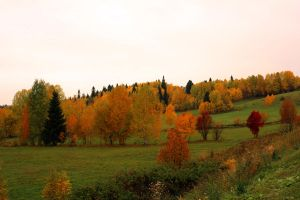Autumn in Western Siberia by MyBlackPrince