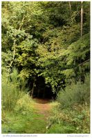 Forest Entrance by In-the-picture