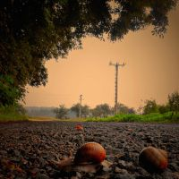 Snail highway by tomsumartin