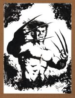 Wolverine Black and White 091312 by ChrisMcJunkin